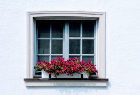 fenêtre fleur